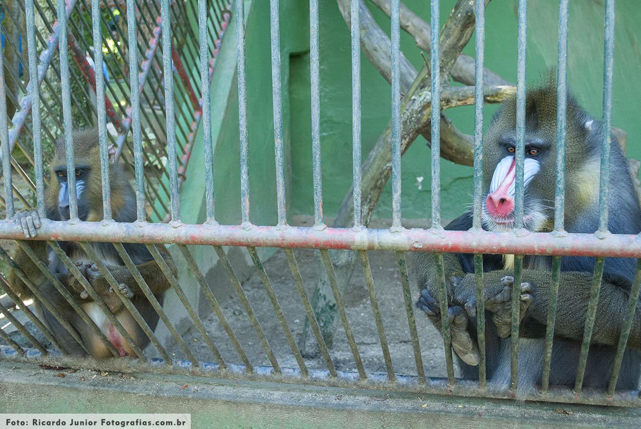 Zoologico de Balneário Camboriú – Fotos de Ricardo Junior / www.ricardojuniorfotografias.com.br